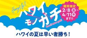 【H.I.S.】ハワイモノガチ ハワイの夏は早い者勝ち!