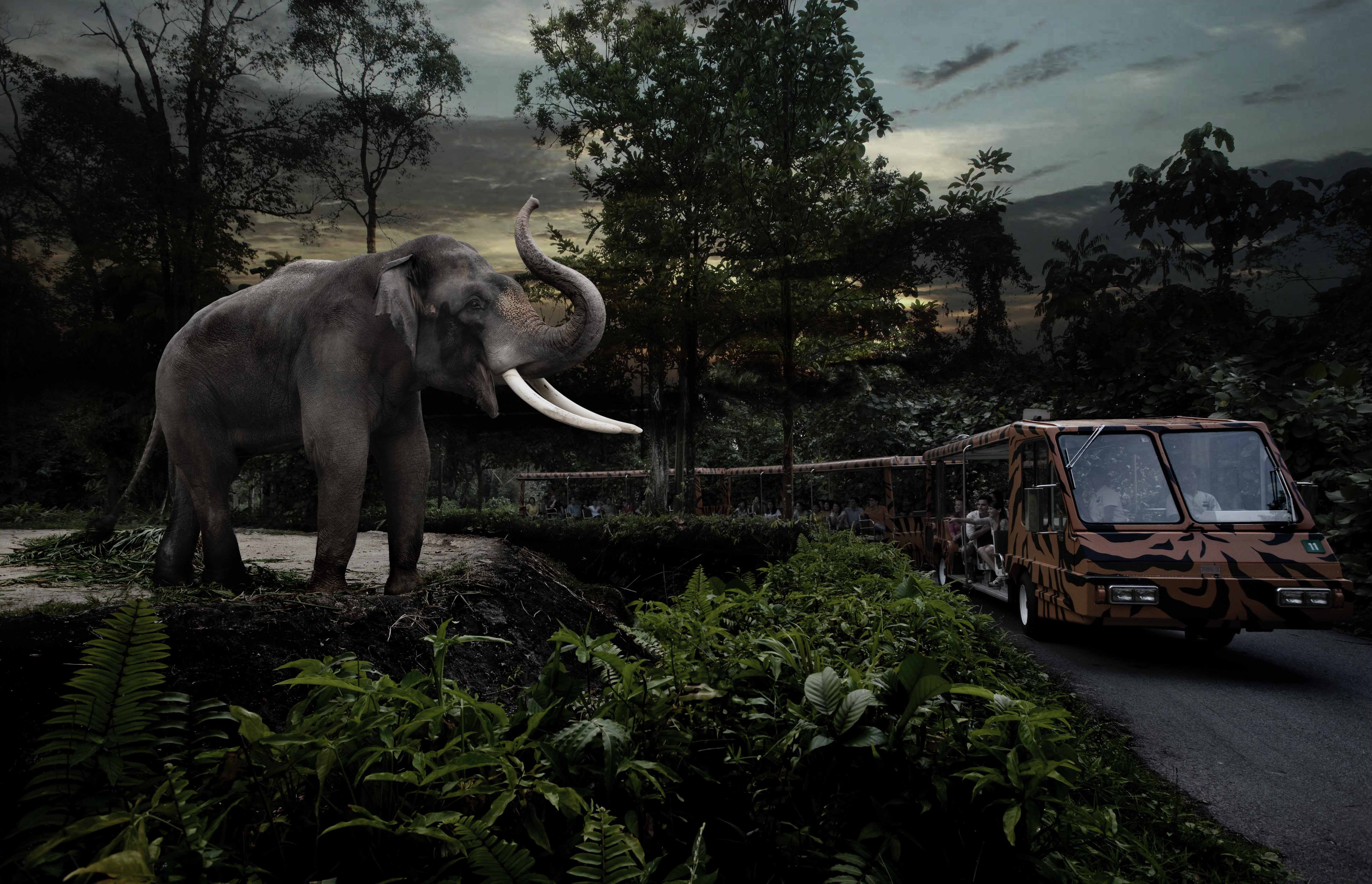 世界初!夜にだけオープンするというシンガポールの動物園