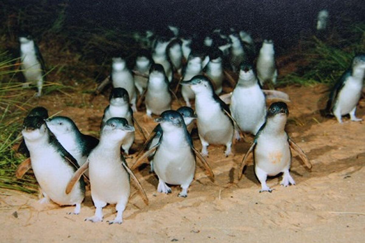 オーストラリアのペンギンがかわいすぎる……カフェも充実!メルボルンが女子におすすめなワケ