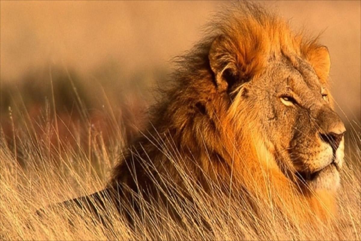 一生モノのケニア旅行! アフリカの大草原ではどんな野生動物に出会える?