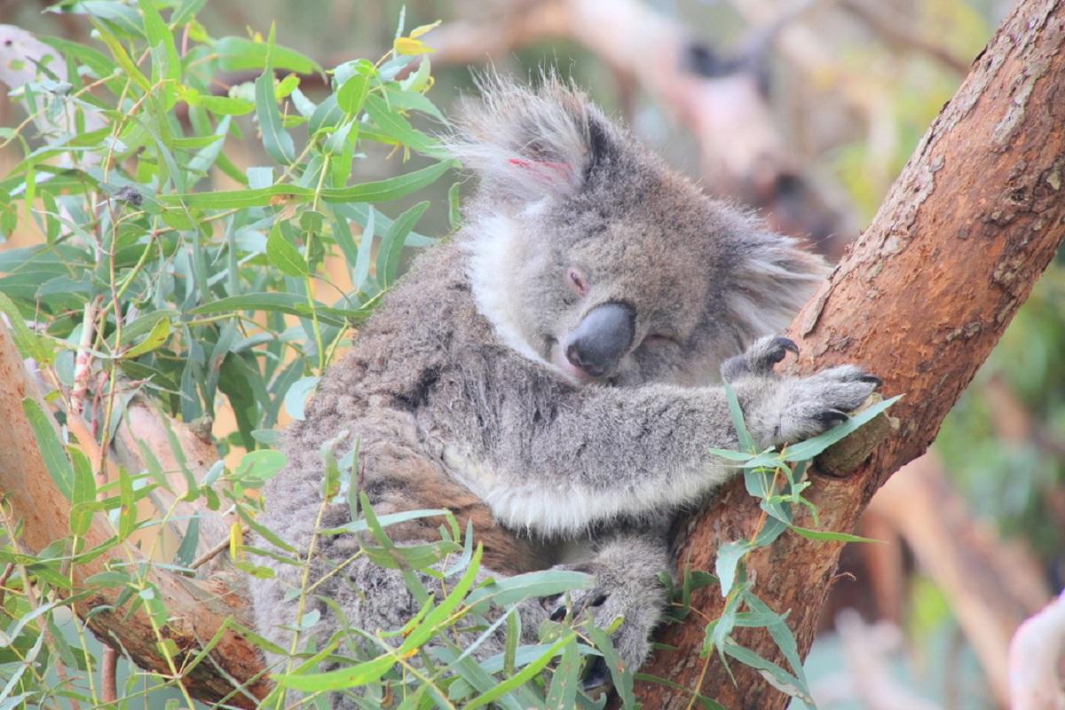 オーストラリアはやっぱり動物王国!出会う&ふれあうツアーがこんなにたくさん!