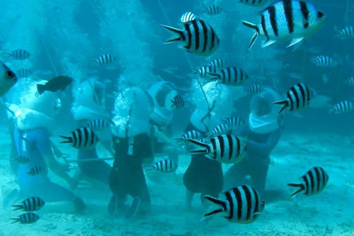 話題のシーウォーカーで海底散歩! ハワイの海をとことん楽しむマリンアクティビティの世界