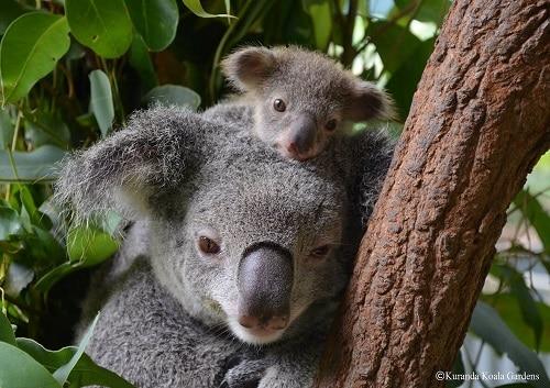 オーストラリア イメージ