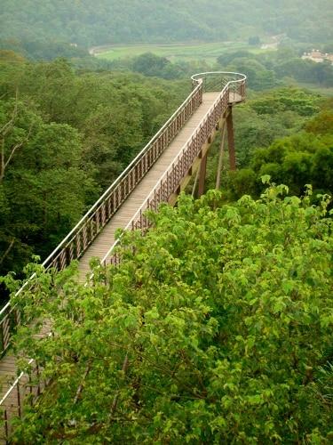 天空歩道-樹海橋