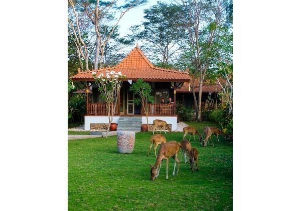 1 Bedroom Forest Villa