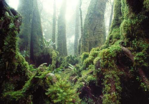 ラミントン国立公園(世界自然遺産)